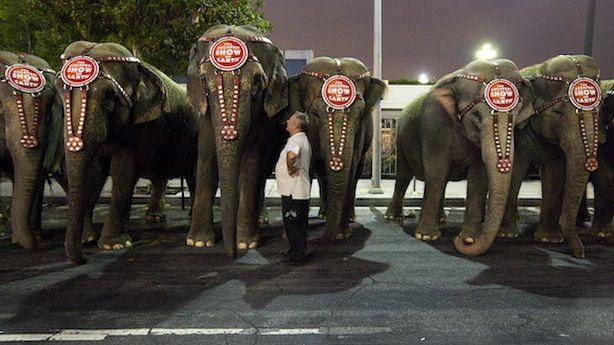How Ringling Bros. Keeps Walking the Legal Tightrope on Elephant Abuse