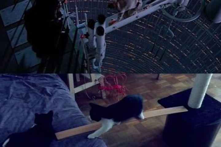 The force is strong with this homemade 'Star Wars' cat parody