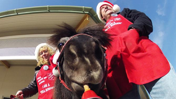 In this Nov. 17, 2012 photo Tinker, a miniature horse, rings a red bell for the Salvation Army outside a craft fair in West Bend, Wis. with his owners Carol and Joe Takacs. Salvation Army officials say Tinker  raises 10 times more than a regular bell ringer. (AP Photo/Carrie Antlfinger)