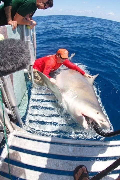 Photo: Giant Bull Shark Surprises Researchers