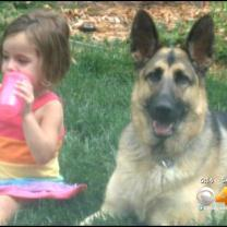 Dog's Owner Reaches Settlement With Erie Police After Pet Shot & Killed