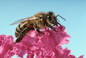 Bee Brains Inspire Tiny Drone Intelligence