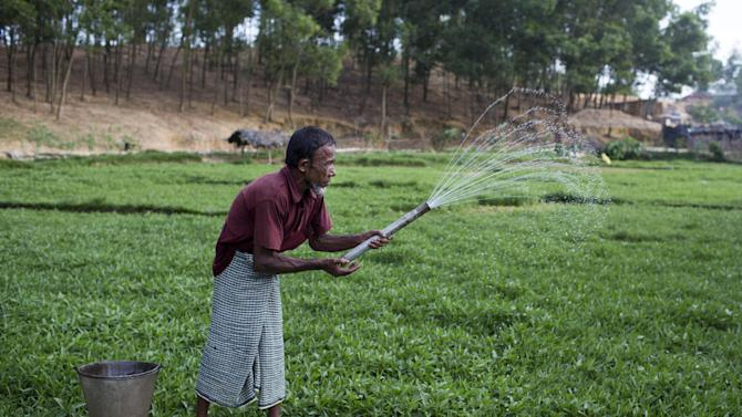 In this Thursday, May 21, 2015 photo, Abul Baser, a Rohingya from Myanmar, sprays fertilizer on crops at a field in Ukhiya, near Cox's Bazar, a southern coastal district about, 296 kilometers (183 miles) south of Dhaka, Bangladesh. As a boat people crisis emerged in Southeast Asia in recent weeks, nearly all the focus has been on the Rohingya: the persecuted Muslim minority fleeing Myanmar. But of the more than 3,000 people who have come ashore this month in Indonesia, Malaysia and Thailand, about half were from Bangladesh, according to the U.N. refugee agency, mainly poor laborers seeking better jobs and a brighter future. (AP Photo/A.M. Ahad)