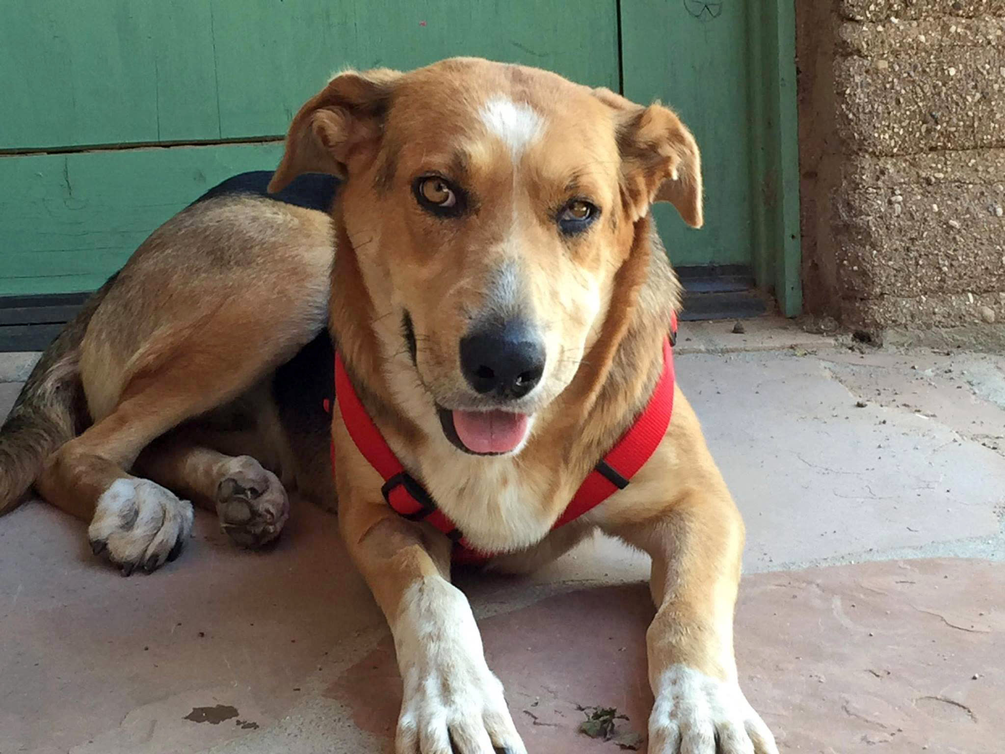 Donations pour in for Arizona dog found hanging from tree