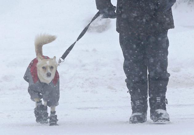 A man takes a walk with his dog during a snowstorm in Quebec City