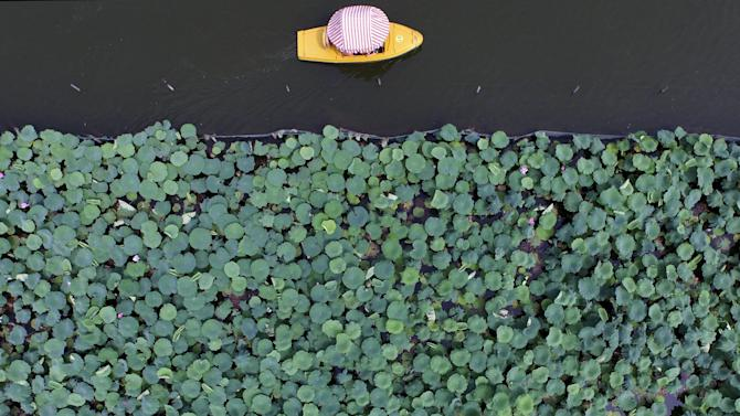 A boat travels past a part of the West Lake covered by lotus leaves, in Hangzhou