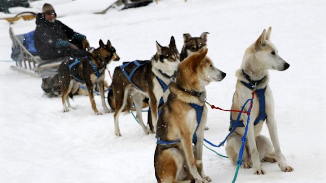 As his lead dog, center front, rests and his other sled dogs wait, John Houghton, of Vermontville, N.Y., waits to give rides to tourists around Mirror Lake Friday, Jan. 30, 2015, in Lake Placid, N.Y. (AP Photo/Mel Evans)