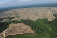 Photograph taken in 2010 during a media trip organized by Greenpeace shows a logged over concession affiliated with Asia Pulp and Paper (APP), located in the forest land of Kuantan Mudik district in the province of Jambi. APP on Friday said that it welcomed an investigation by US toy maker Mattel into allegations that it destroys Indonesian forests to source its products