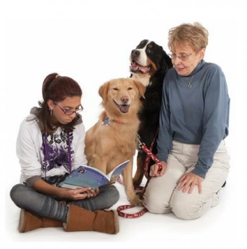Therapy Dogs Travel
