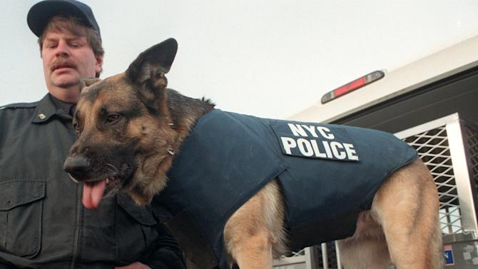 "FILE- U.S. Police officer Peter Davis of the NYPD K-9 unit stands with his 4-year-old German shepherd named Apollo wearing a bulletproof vest at the unit's training center in this file photo dated Friday Feb. 7, 1997.  Apollo was awarded the Dickin Medal for gallantry in 2002 on behalf of all search and rescue dogs ""for tireless courage in the service of humanity during operations following the 11 September 2001 terror attacks.  The latest animal to receive the Dickin Medal is announced Thursday Oct. 25, 2012, a bomb-sniffing army springer-spaniel dog named Theo, who died in Afghanistan on the day his handler was killed has been posthumously honored with the Dikin Medal, Britain's highest award for animal bravery, during a ceremony in London Thursday Oct. 25, 2012. Theo worked for five months in Afghanistan with Royal Army Veterinary Corps Lance Cpl. Liam Tasker, searching out roadside bombs, but Tasker was killed in a firefight with insurgents in Helmand Province in March 2011, and Theo the dog died hours later. (AP Photo/Doug Kanter, File)"