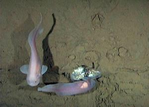 Into the Deep: Expedition Seeks Life in Ocean Tren …