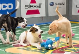 Animal Planet's 'Puppy Bowl IX' Surges During Super Bowl Power Outage