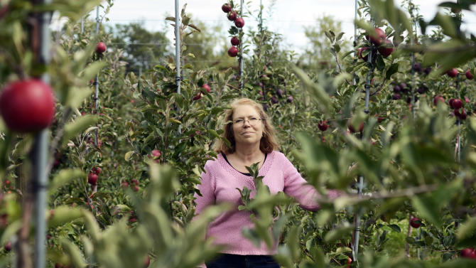 Cornell University faculty leader in the apple breeding program, Dr. Susan Brown, stands in an apple orchard at the Cornell University's Fruit and Vegetable Research Farm in Geneva, N.Y., Monday, Sept. 23, 2013. (AP Photo/Heather Ainsworth)