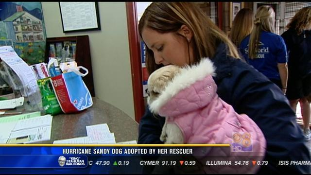 Hurricane Sandy dog adopted by her rescuer