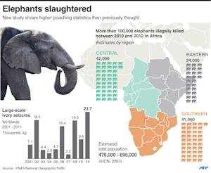 There could be as few as 470,000 African elephants, …