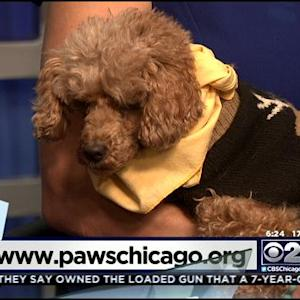 PAWS Pet Of The Week: Jaslene