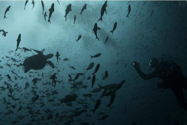 A scuba diver takes pictures of a turtle close to Wolf Island at Galapagos Marine Reserve