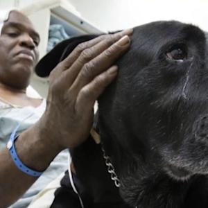 Blind man gets to keep dog that saved his life