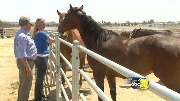 Neglected Fresno County horses need homes