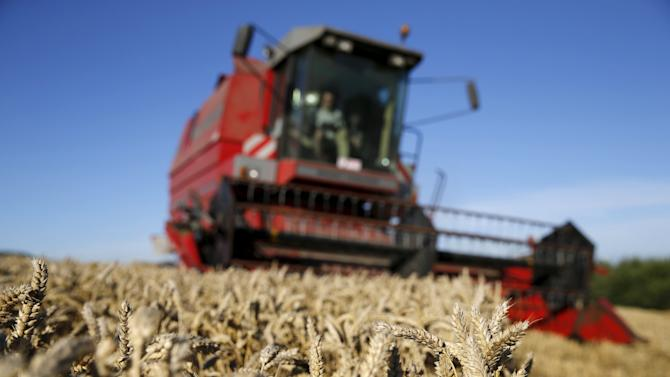 French farmer drives his combine as he harvests wheat in a field in Coquelles, near Calais