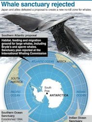 <p>Graphic on the proposed southern Atlantic Ocean whale sanctuary, rejected at the Intenational Whaling Commission meeting in Panama after Japan and its allies voted against the initiative.</p>