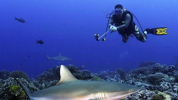 Why Sharks Generate More Money Alive Than Dead