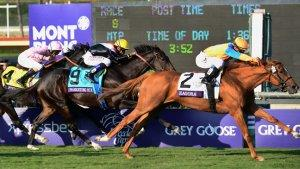 No Winner in Hollywood Showdown at Breeders' Cup