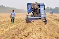 "<p>Chinese farmers harvest a wheat field in Zouping in northeast China's Shandong province in June 2012. World farm production must rise 60 percent by 2050 to meet the needs of a growing population but this has to happen in ""a more sustainable way,"" the UN food agency FAO and the OECD said on Wednesday.</p>"