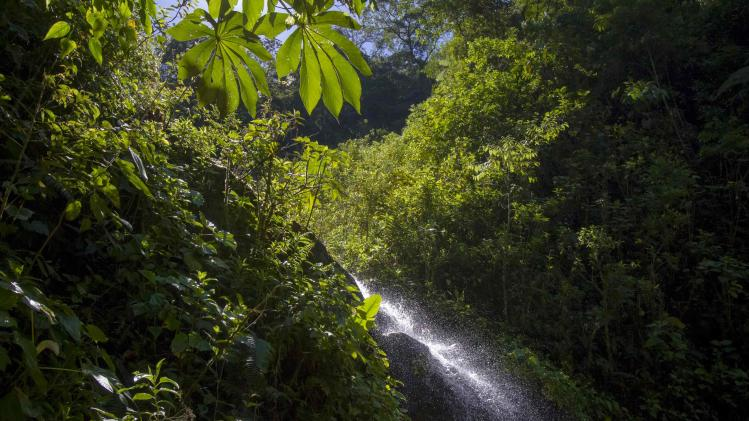 A small cascade is seen at the Manu Biosphere Reserve Cloud Forest in Peru's southern Amazon region of Madre de Dios