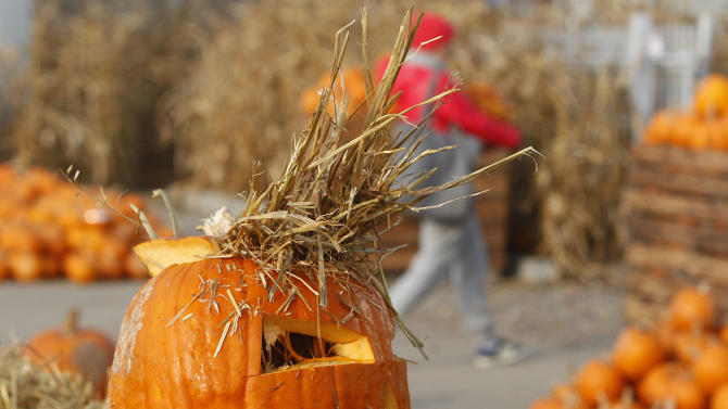 A private open-air bazaar is selling pumpkins of all sizes as decoration, ahead of Halloween that is taking root in Poland, especially among school children, but also for soup, cakes and sweet-and-sour preserves for the winter, in Warsaw, Poland, Thursday, Oct. 30, 2014. (AP Photo/Czarek Sokolowski)