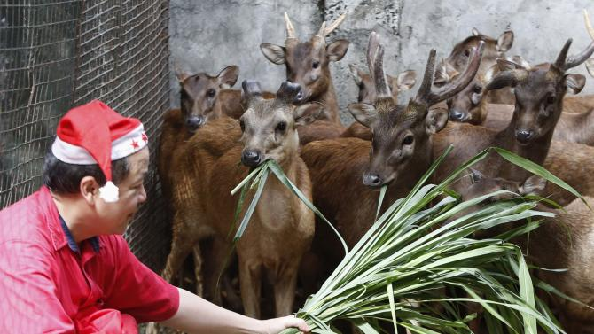 Zoo owner Tangco feed reindeers during the Animal Christmas party at Malabon Zoo in Manila