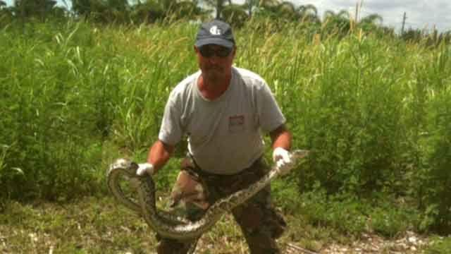 Florida's 'Python Challenge' draws hundreds