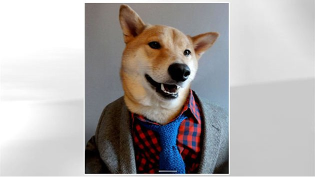 Bodhi the Stylish Menswear Dog Offers Fashion Advice