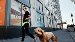 Upscale apartments are going to the dogs