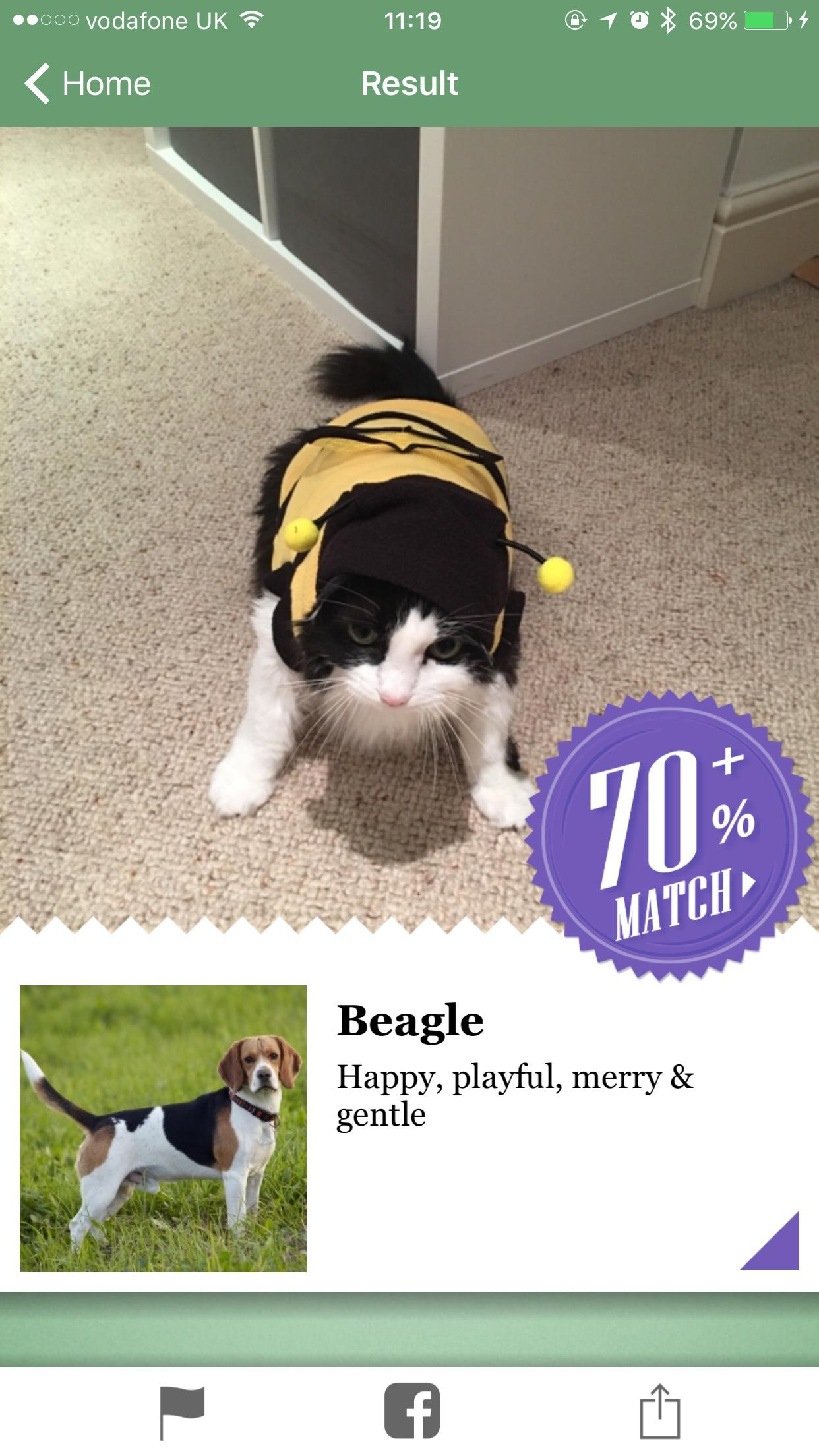 Microsoft's new iPhone app thinks my annoying cat is 70 percent dog