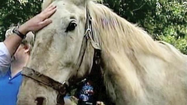 Horse rescued after trapped in well for 2 days