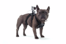 Brilliant new GoPro accessory will let you see the world from a dog's eye view