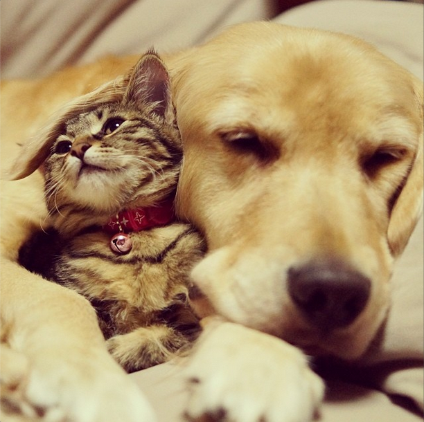 Dog Befriends Cat