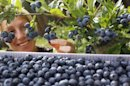 Free Radical Damage-Fitness Foods-Berries