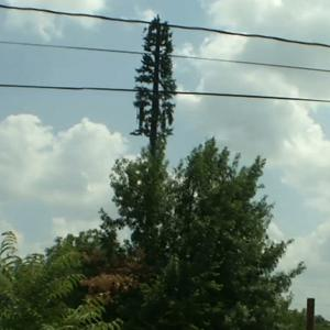 Creative Makeovers for Ugly Cellphone Towers