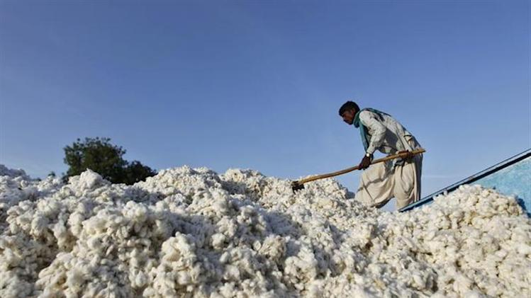 A worker fills a spanning machine with cotton at a cotton processing unit at Kadi town in Gujarat March 21, 2013. REUTERS/Amit Dave/Files