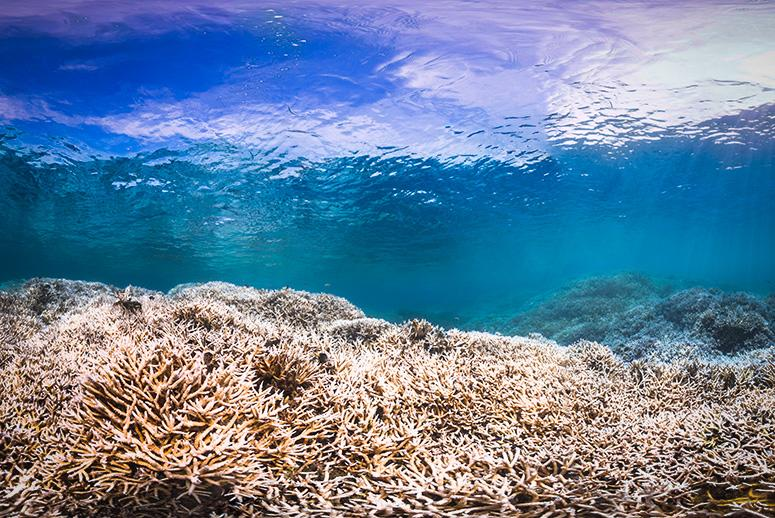 Third Time's a Disaster: Latest Coral Bleaching Hits Reefs Worldwide