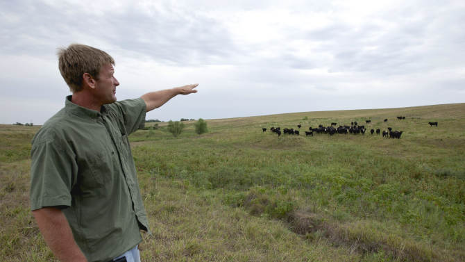 In this photo from Aug. 1, 2012, Todd Eggerling, of Martell, Neb., points to some of his cattle grazing on thin pasture. Due to the summer's record drought and heat his cattle operation is in bad shape. Eggerling would normally graze his 100 head of cattle through September, but the drought has left his pastureland barren. He's begun using hay he had planned to set aside for next year's cattle, and is facing the reality that he will have to sell the cattle for slaughter early at a loss. (AP Photo/Nati Harnik)