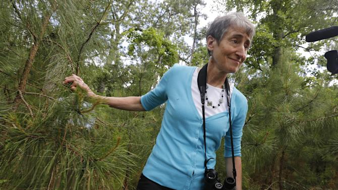 U.S. Interior Secretary Sally Jewell walks through the woods during a tour of Jamestown Island in Jamestown, Va., Thursday, June 5, 2014. Jewell toured Jamestown to highlight climate change's threat to the first permanent European settlement in America. The island settled in 1607 is among the coastal Va. lands being lost to rising seas. (AP Photo/Steve Helber) (AP Photo/Steve Helber)