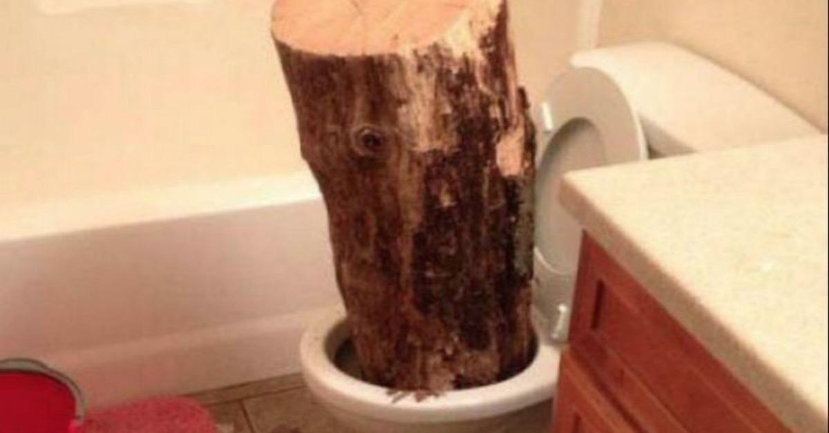 27 Crazy Bathroom Moments That Are Hilarious