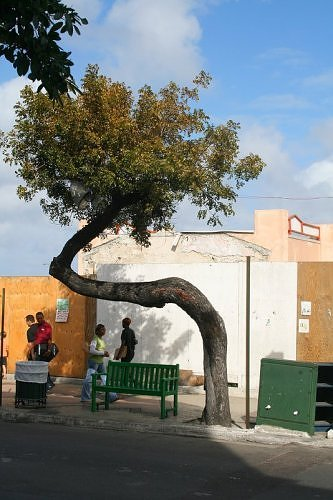 Tree conveniently moving its shadow towards the bench. (Photo: heathocampo/environmentalgraffiti.com)