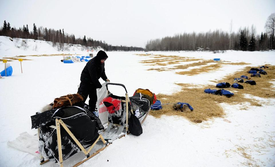 Matt Failor packs his sled to leave the Skwentna, Alaska, checkpoint of the Iditarod Trail Sled Dog Race on Monday, March 5, 2012. Failor was the last competitor to depart the checkpoint. (AP Photo/Anchorage Daily News, Marc Lester)