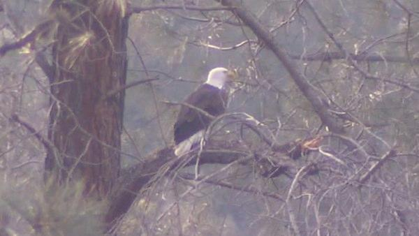 Bald eagle boat tours at Millerton Lake