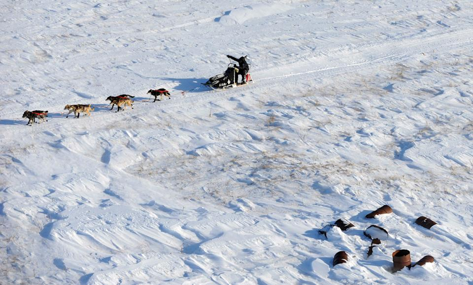 Dallas Seavey makes his way toward the finish line in Nome, Alaska, during the Iditarod Trail Sled Dog Race on Tuesday, March 13, 2012. (AP Photo/Anchorage Daily News, Marc Lester)