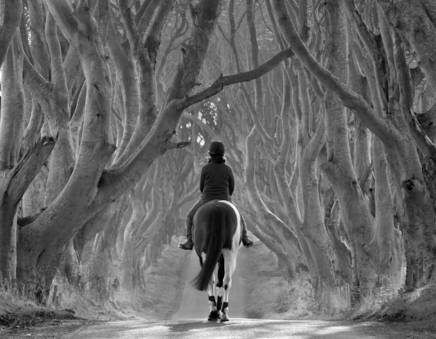 'Riding Out, the Dark Hedges', County Antrim, Northern Ireland: Bob McCallion's image of Melanie riding her horse Rocky, under some 300-year-old birch trees was commended in the 'Living View' category